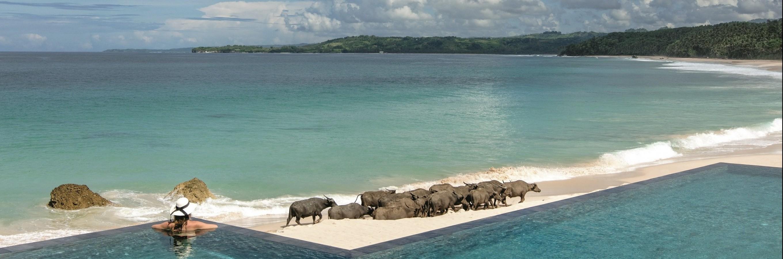 Water buffaloes at Nio Beach Club